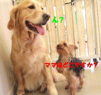 2007_06170001.jpg