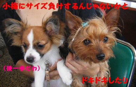 2007_07070042.jpg