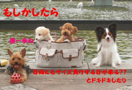 2007_07070075.jpg