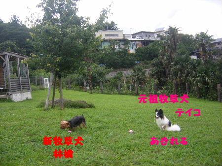 2007_07150050.jpg