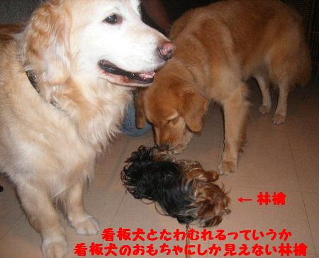2007_07150074.jpg