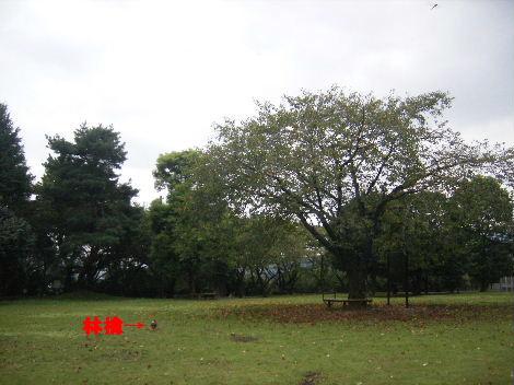 2007_10020010.jpg