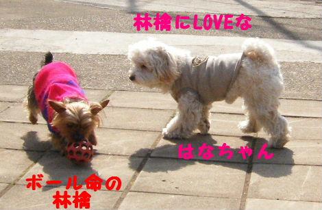 2008_03020018.jpg