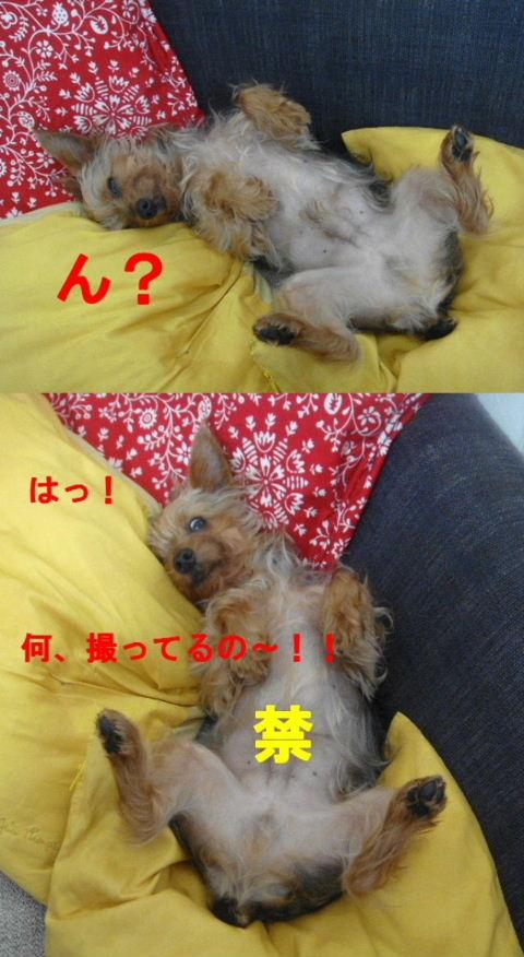2009_0930ringo0021sexy.jpg
