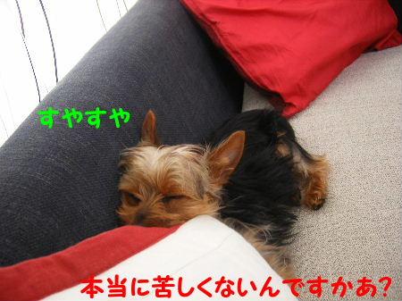 kurushii