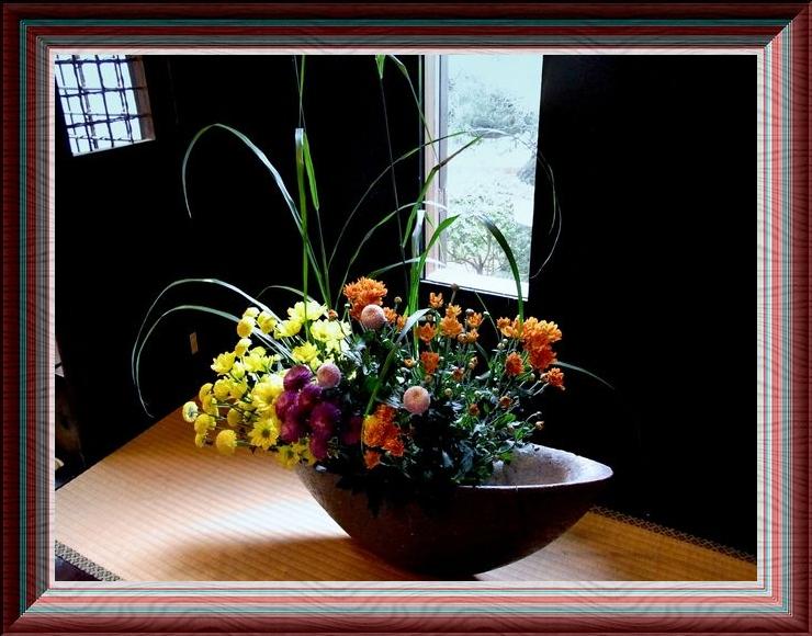 菊○61茶太い