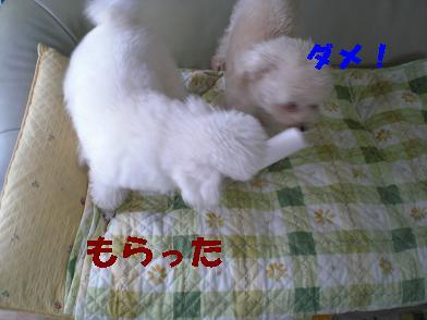 CIMG0193.jpg