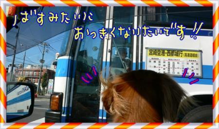 バスでかっ!