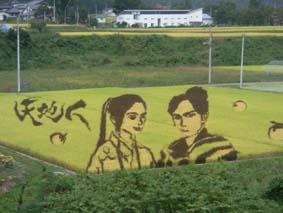小野川のたんぼアート