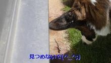 2009110605.jpg
