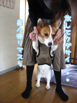 捕らわれた宇宙犬