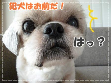 ゆきち犯犬