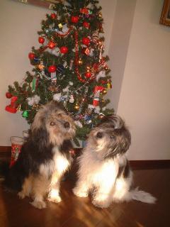 クリスマスツリーc
