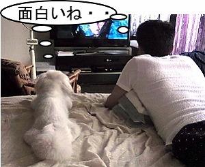 テレビ・・