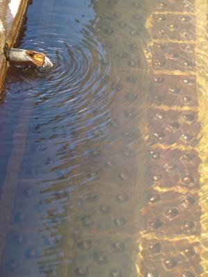 湯陶里の足湯