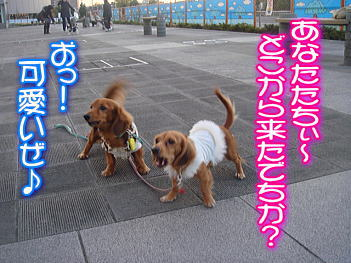20071130205846.jpg