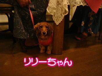 12.9リリーちゃん