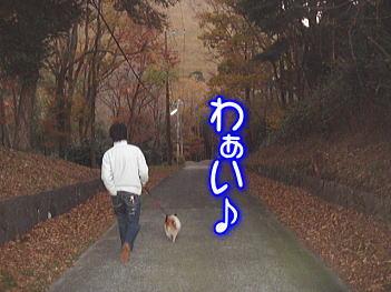12.9わぁいお散歩