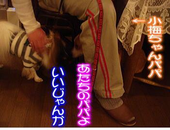 12.9小梅ちゃんパパ