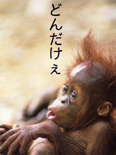 photo_20071029232546.jpg