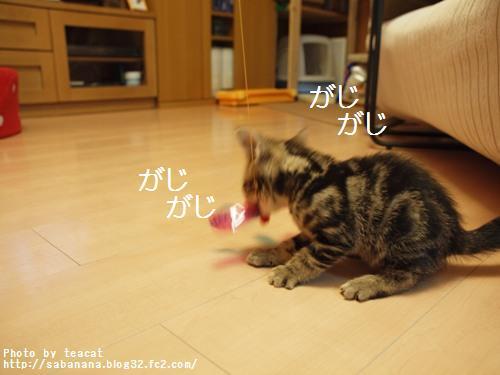 02143_20110215100242.jpg