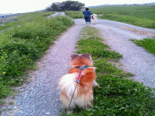 ロビン散歩レッゴー
