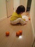 110307_たんかん (6)