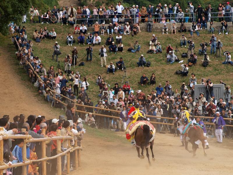 今治市 菊間祭 お供馬の走りこみ