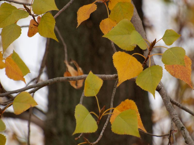 西条市 東予運動公園 色ずく木の葉