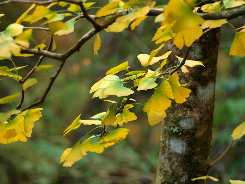 唐岬の滝まで 紅葉