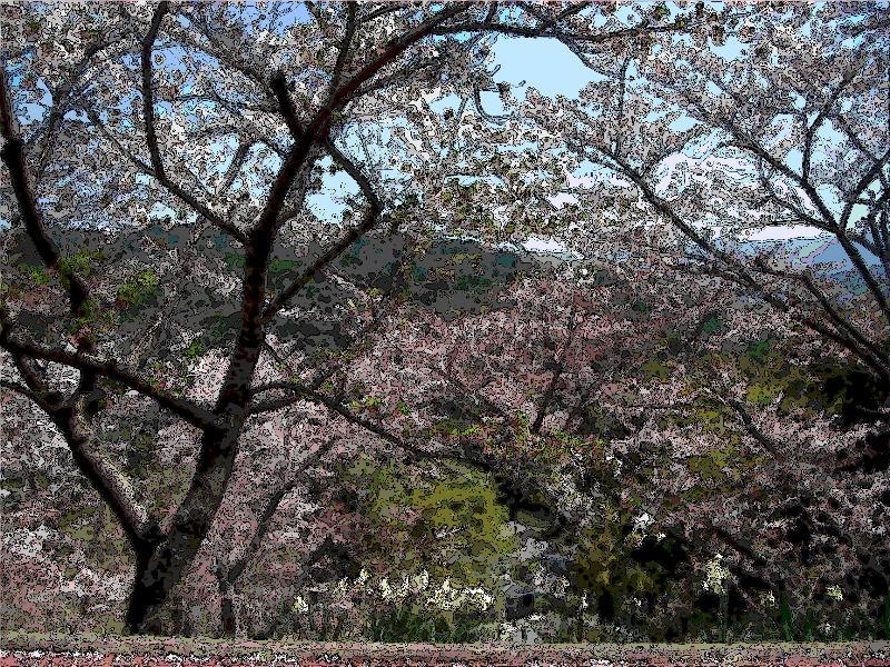 喜多郡内子町 龍王公園 桜