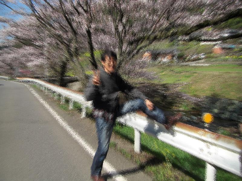 喜多郡内子町 内子街道 桜