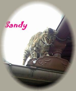 sandy78-1