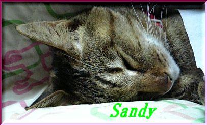 sandy79