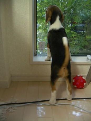 ちいさいころの、窓際サンディー。