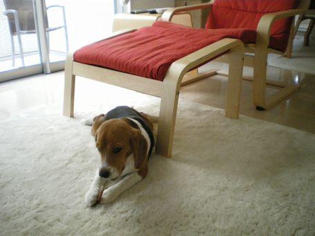 なぜか、ちょびっと椅子の下。