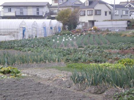 地元の畑。