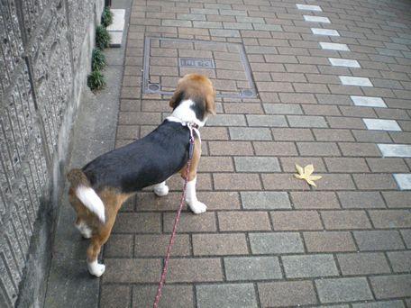 歩いてくの?
