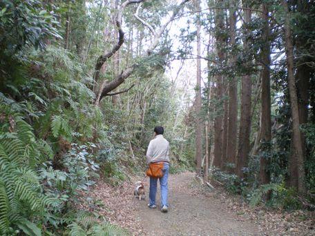 山道を歩いてみよう。