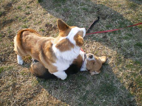 サンディー、倒されてばっかり!