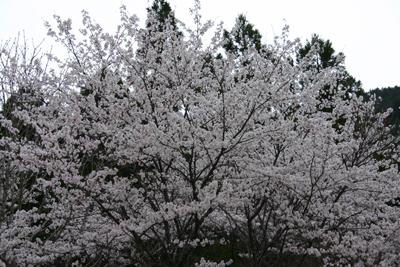 玖木の一日橋めぐり2011年春110403a