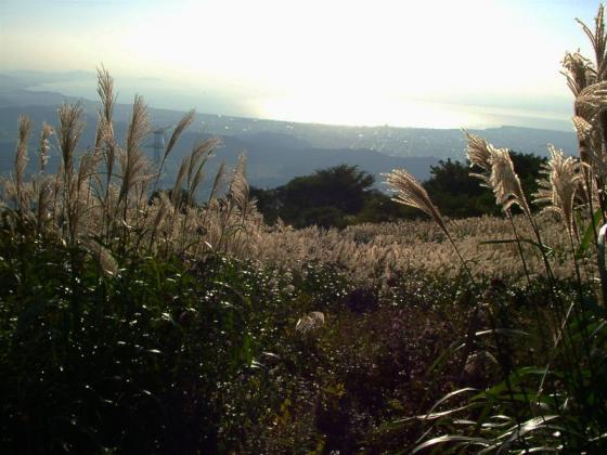 ススキと琵琶湖