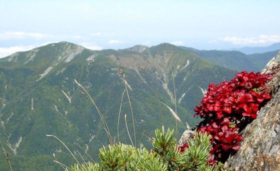 092117中岳途中にて小河内岳