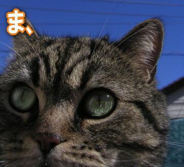 maru_01.jpg
