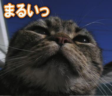 maru_03.jpg