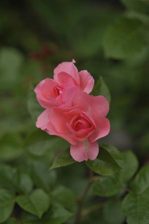 jardinsdefrance2011525-1.jpg