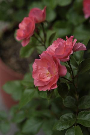 jardinsdefrance2011527-1.jpg