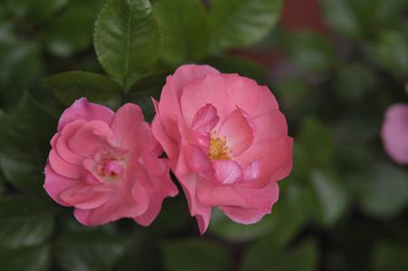 jardinsdefrance2011529-1.jpg