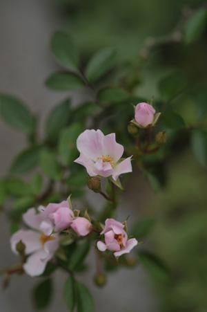 nozomi2011525-1.jpg