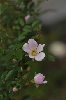 nozomi2011525-2.jpg